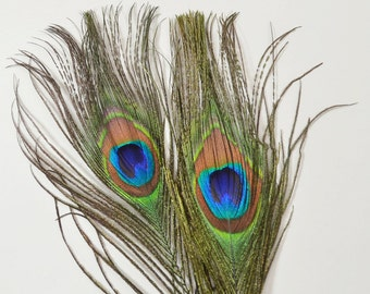 2pcs - Natural Peacock Feathers