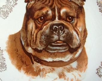 Turn of The Century Bulldog Decorative Plate