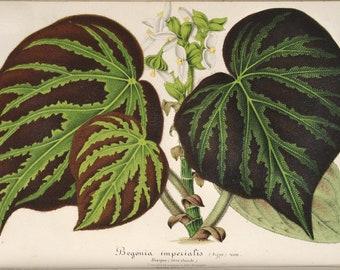 Botanical Print, Vintage Botanical Art, Tropical Plant Wall Decor, Vintage Home Decor, INSTANT DOWNLOAD