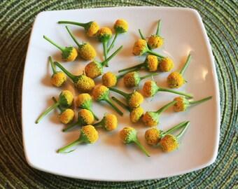 Edible Flower Buzz Button™ 50 Count