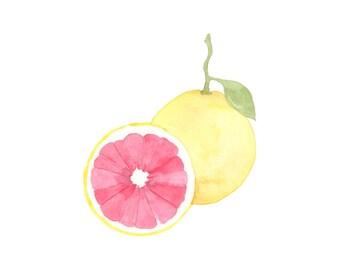 Grapefruit Watercolor Pack