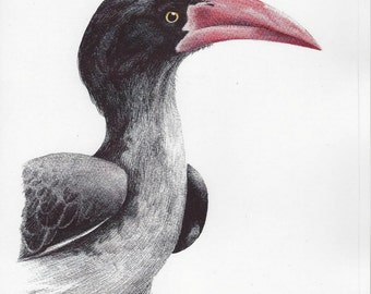 Crowned Hornbill Bird Print