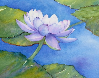 water lily painting-water lily watercolor-lily pond-purple water-lily-botanical art-botanical watercolor-botanical painting-water lily art