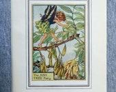 Ash Tree Flower Fairy Vin...