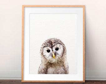 Owl Print, Nursery Wall Art, Baby Owl Art, Baby Animals, Nursery Art, Woodland Animal, Nursery Decor, Baby Animal Prints, Kids Printable Art
