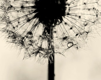 dandelion print, dandelion wall art, black and white dandelion photography, flower fine art print, nature photography, home decor wall decor
