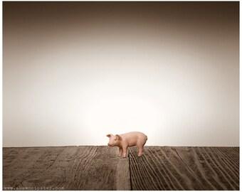 Nursery Decor, Baby animal art, Baby room ideas, Farm Animals, Baby Piglet One Photo Print