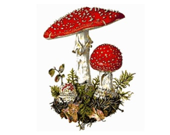 Amanitas Cross Stitch Pattern