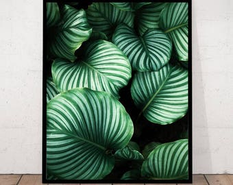 Green Leaves Print, Leaf Photography, Close Up Leaves, Green Photography, Details Green Leaves, Botanical Wall Art