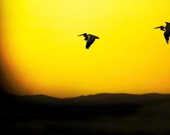 Photo Pelican Sunset, Size 8x12 inches, Bird Photography, Bird Art, Yellowish Sunset