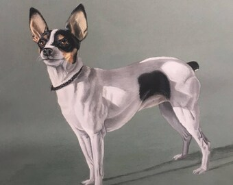 Vintage Pastel Dog Portrait - Rat Terrier - Signed S.M. Lacy - Framed and Matted - 1967