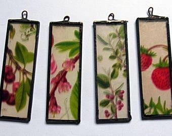 A Set of 4   Botanical Fruit Microscope slides