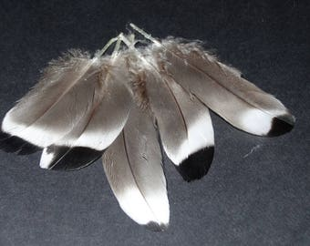 Set of 10 small natural duck feathers
