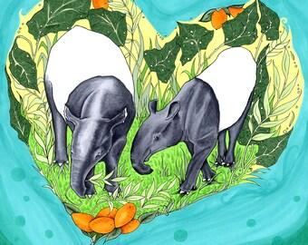 Tapirs Sharing Fruit
