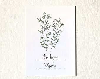 Food illustration archival art print 'Thyme' (Herbs) 5x7 Foodie Gift