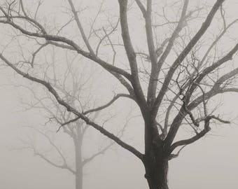 black and white photography, tree photography, tree print, trees in fog, winter trees, landscape, tree, sepia, foggy landscape