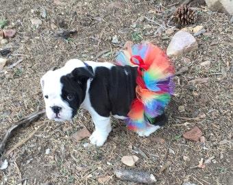 Rainbow Tutu For Bulldogs/Rainbow Tutu For Dogs/Rainbow Tutu