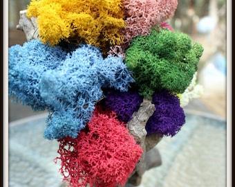 Reindeer moss-Get all 11 colors in 1 bag-11 oz bag total-Preserved lichens-Reindeer moss in colors