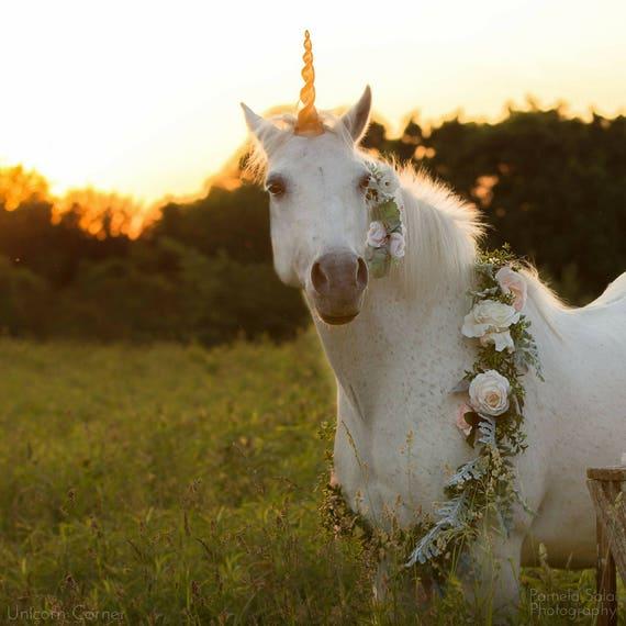 Unicorn horse costume / unicorn horn for horse / unicorn horn