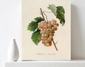 Printable Grapes Poster Botanical Illustration Grapes Print Antique Fruit Print Vintage Botanical Art Kitchen Art Decor DIY Digital Download