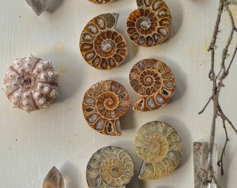 Ammonite hoop earweights, PREORDER! ammonite earrings, fossil earrings, fossil jewelry, Baroness Wolfe, bone jewelry, handmade jewelry