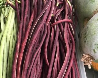 Red Yardlong or Asparagus Bean (10 through 1/4 LB seeds) noodle yard long #66