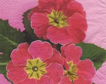 Pink 3237 - Set of 4 napkins Primroses
