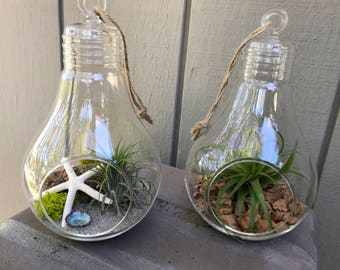 Hanging glass bulb Terrarium with Air Plant, KIT to make terrarium, DIY kit to make your own terrarium, air plants, terrarium