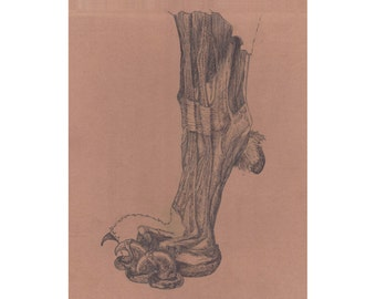 "Anatomical Lion Paw Giclee Print, ""Tina"""