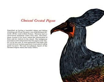 Woodcut and Letterpress Bird Print: Choiseul Crested Pigeon
