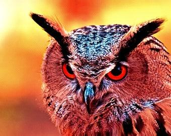 Fiery Owl Art
