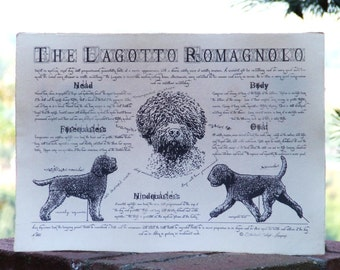 Antique styled dog standard - Lagotto Romagnolo