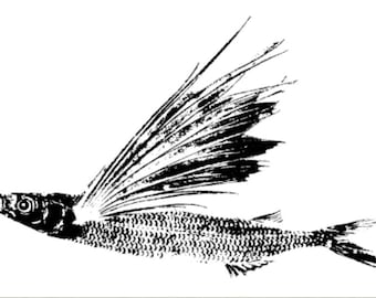 Flying Fish Nature Print by Fred B Mullett