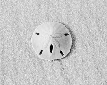 Sand dollar, shell art photo print, black and white beach photography, paper or canvas picture, bathroom wall decor 8x10 16x20 20x30 24x36