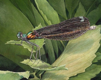 MATTED Print of Ebony Jewelwing Damselfly from Original Watercolor Painting, Dragonfly, Wall Art, Home Decor, Nature, Wildlife, Kids, Green