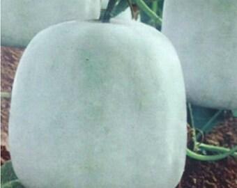 20 Mini Wax Gourd Seed Benincasa Hispida Winter Melon Organic Vegetables TG1