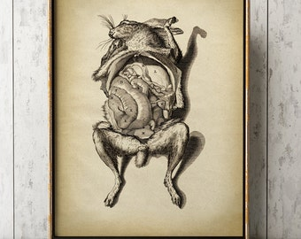 BIZARE ANIMAL ANATOMY Print, Vintage Rabbit Anatomy Poster, Scientific Illustration Wall Art, Vet Gift, Veterinary Anatomical Drawing Art