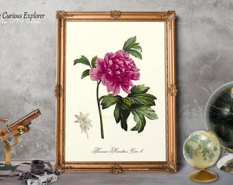 Peony Home Decor, Botany Prints, Flower Victorian Art, Peony Flower Print, Peony Wall Decor, Gift for Wife, Floral Home Decor - E10p3
