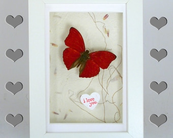 I Love you butterfly -Real Framed butterfly