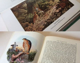 Natual History, British Game 1940s  illustrated - Colour plates Vintage Hardback Countryside england