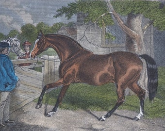 """19th Century Equine Hand Coloured Engraving Print """"JOE LOVELL"""" 1862 E.Corbet, E.Hacker Published by Rogerson and Tuxford"""
