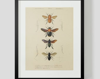 Vintage Insect Bee Entomology Plate 9