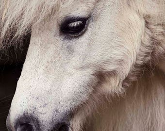 Vintage Pony
