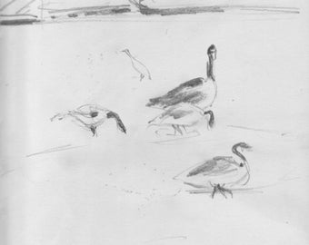 Geese in Inwood Hill Park - 8x10 inch print of original pencil sketch - NYC - upper Manhattan