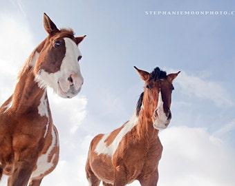 Horse Photography, Horses, Horse Portrait  fine art equine photography, 8x10