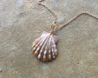 Very Petite Tiger Sunrise Shell Pendant