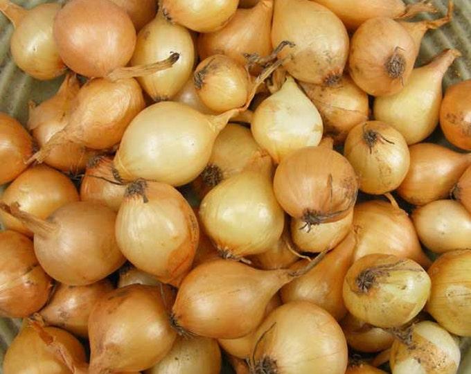 Yellow Onion Bulbs Organic | Stuttgarter Onion Sets 4 Pounds SPRING SHIPPING