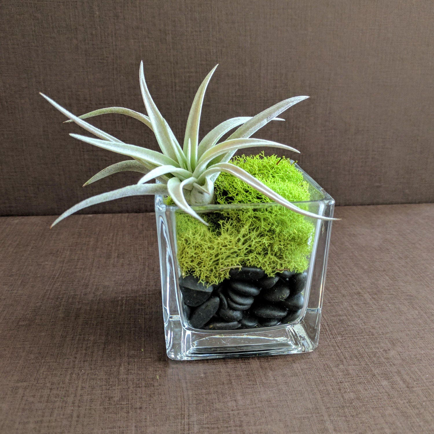 Air Plant Square Glass Vase Terrarium With Green Reindeer Moss
