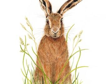 Hare Fine Art Print, Nature Print, Hare Illustration, Animal Print, Wall Art, Gift