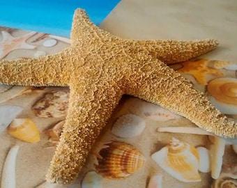 "18 Large Sugar Starfish 8""-10"" Beach Wedding Decorations/Coastal Home Decor"